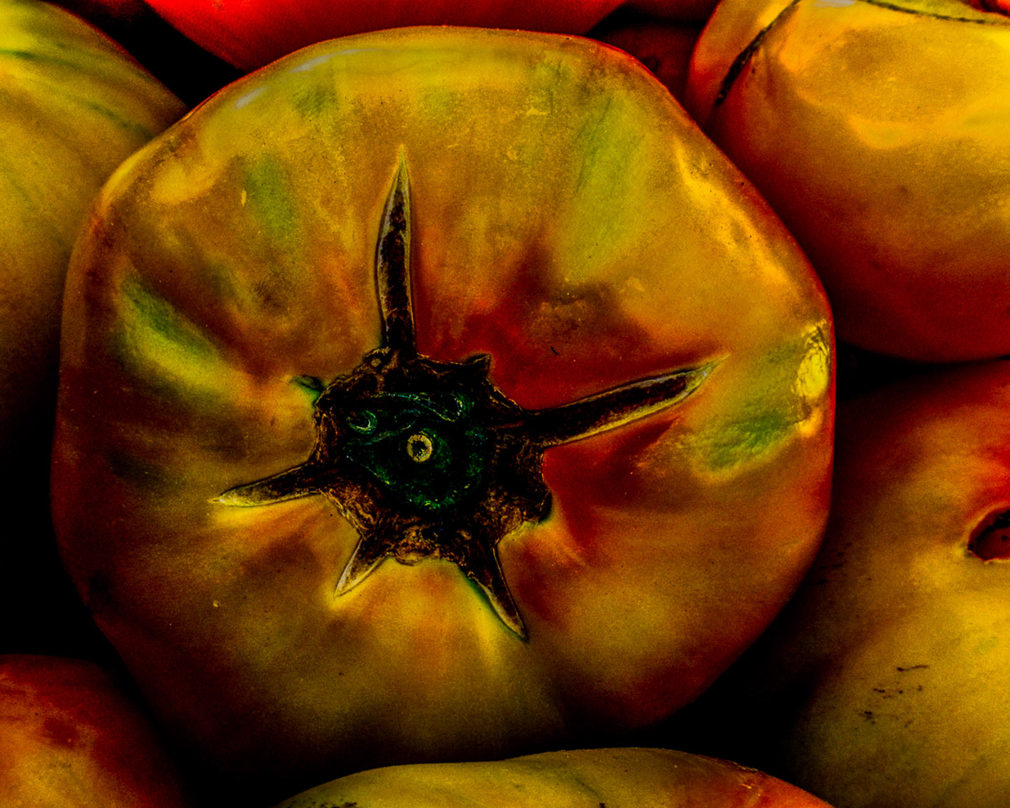 YellowTomatoIMG_5794_03-Produce